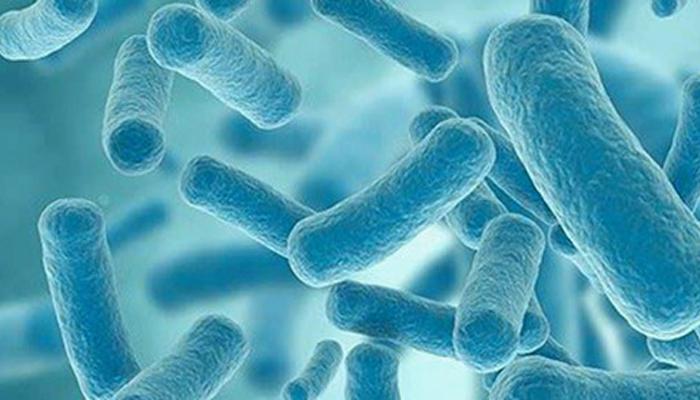 découvrir les probiotiques