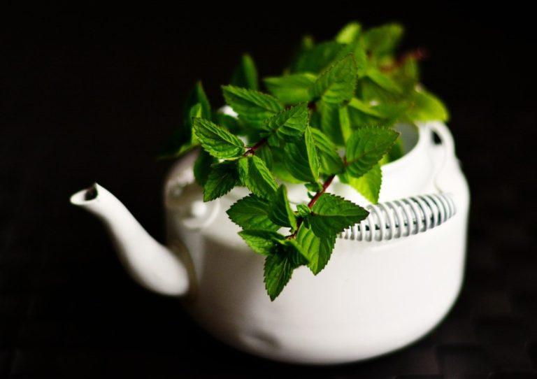 Médecine par les plantes ou phytothérapie les secrets de son efficacité